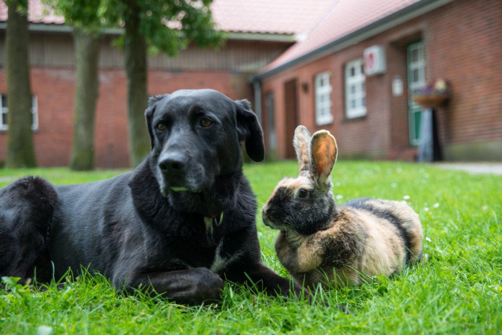 Wir behandeln Tiere Tierarzt Stolte